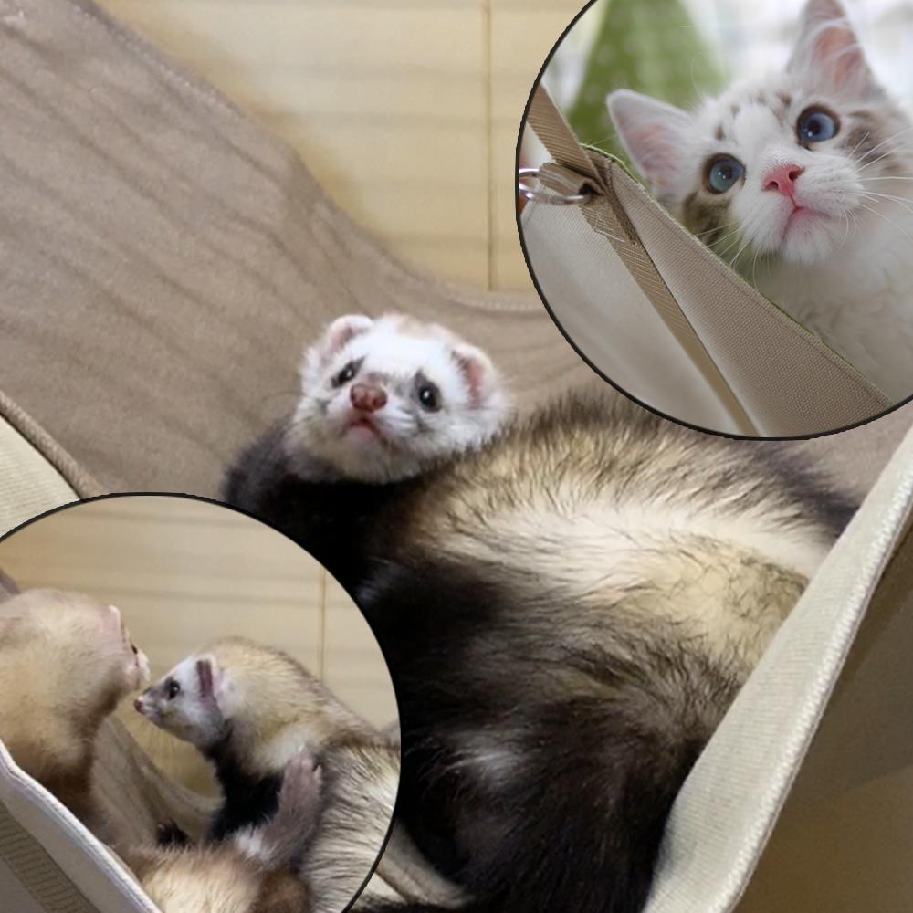 耐荷重10㎏!多頭飼いや猫にも嬉しい大きくて丈夫なハンモック。